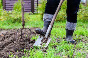 Apstiprina Rīgas mazdārziņu izmantošanu 2021.gadā