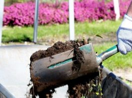 Par ģimenes (sakņu) dārzu ierīkošanu un uzturēšanu uz Rīgas pašvaldībai piederošas zemes